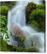 The Mossy Mist Canvas Print