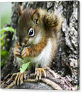 The Most Adorable Baby Squirrel Canvas Print