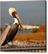 The Most Beautiful Pelican Canvas Print
