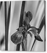 The Mystery Of Spring 2 Bw Canvas Print