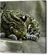 The Napping Rock Canvas Print