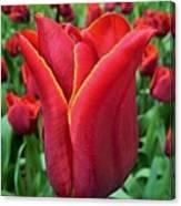 The Nederlands Tulip Festival 1 Canvas Print