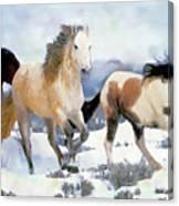 The Nevada Herd Canvas Print