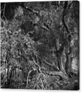 The Oak Canvas Print