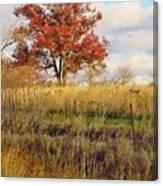 Red Oak Under November Skies Canvas Print