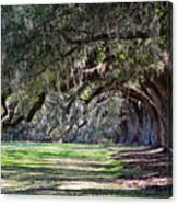 The Oaks At Boone Hall Canvas Print