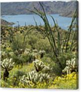 The Ocotillo View Canvas Print