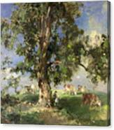 The Old Ash Tree Canvas Print