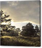The Old Heath Canvas Print