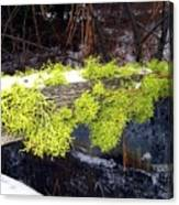 The Old Mossy Flume Canvas Print