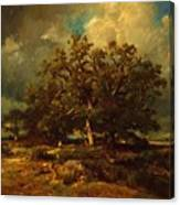 The Old Oak 1870 Canvas Print