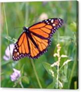 The Orange Butterfly Canvas Print