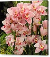 The Orchid Garden Canvas Print