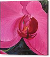 The Orchid In San Juan Canvas Print