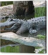 The Other Florida Gator Canvas Print