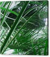 The Palm House Kew England Canvas Print