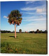 The Palmetto Tree Canvas Print