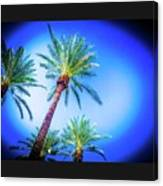 The Palms Of Scottsdale  Canvas Print