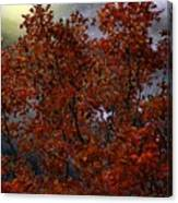 The Passion Of Autumn Canvas Print