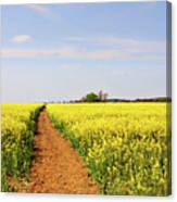 The Path To Bosworth Field Canvas Print