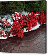 The Path To Christmas - Poinsettias, Trees, Snow, And Walkway Canvas Print