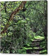 The Path We Walked Canvas Print