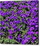 The Pathway To Purple Canvas Print