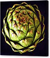 The Patterns Of The Artichoke Canvas Print