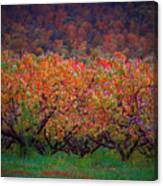 The Peach Orchard Canvas Print