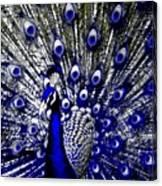 The Peacock Fan Canvas Print