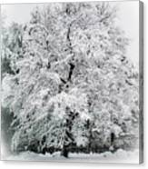 The Pear Tree Canvas Print