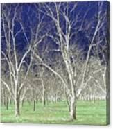 The Pecan Grove Canvas Print