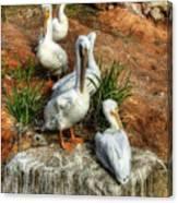 The Pelican Clan Canvas Print