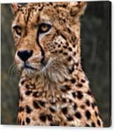 The Pensive Cheetah Canvas Print