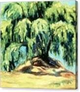 The Pepper Tree Canvas Print