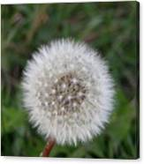 The Perfect Dandelion Canvas Print