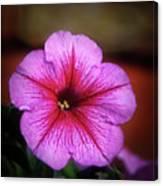 The Petunia Canvas Print