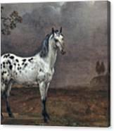 The Piebald Horse Canvas Print