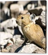 The Pika Canvas Print