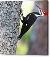 The Pileated Canvas Print
