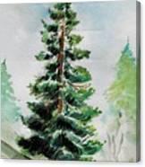 The Pine  Canvas Print