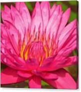 The Pinkest Of Pinks Canvas Print