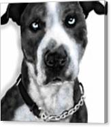 The Pooch With Blue Eyes Canvas Print