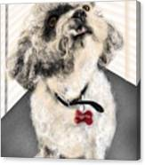 The Pooch With The Crooked Tooth Canvas Print