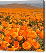 The Poppy Fields - Antelope Valley Canvas Print