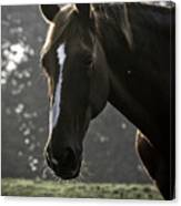 The Portrait Of The Horse Canvas Print