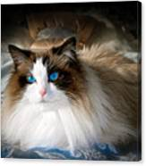 The Blue Eyed Princess  Canvas Print