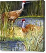 The Protector - Sandhill Cranes Canvas Print
