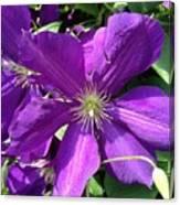 The Purple Sunny Day  Canvas Print