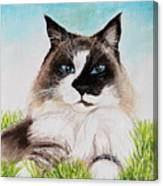 The Ragdoll Canvas Print
